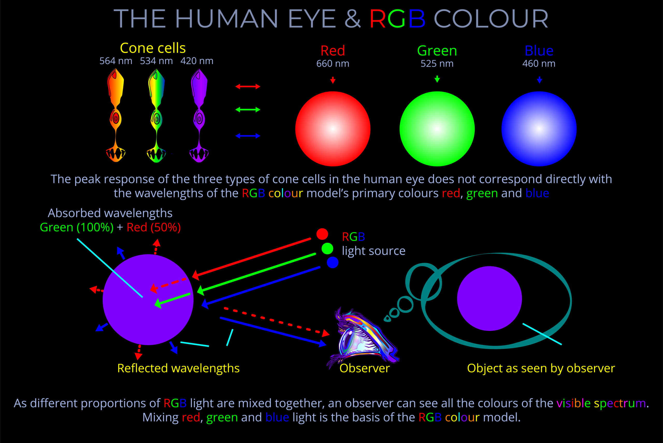 The Human Eye And Rgb Colour Light Colour Vision